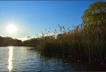 Toronto's Iconic High Park: Grenadier Pond No. 12