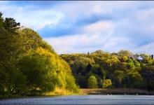 Toronto's Iconic High Park: Grenadier Pond No. 15