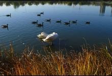 Toronto's Iconic High Park: Grenadier Pond No. 26_