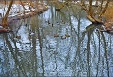 Toronto's Iconic High Park: Grenadier Pond No. 8